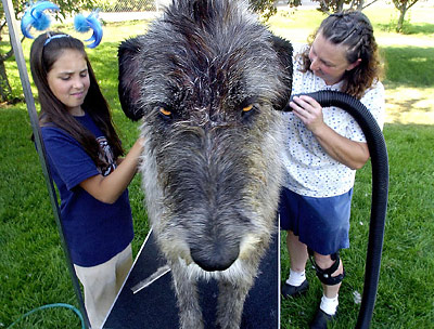 "Dog And Human Mix ""dog wash"" armed with q-tips,"